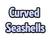Curved Seashells - Online